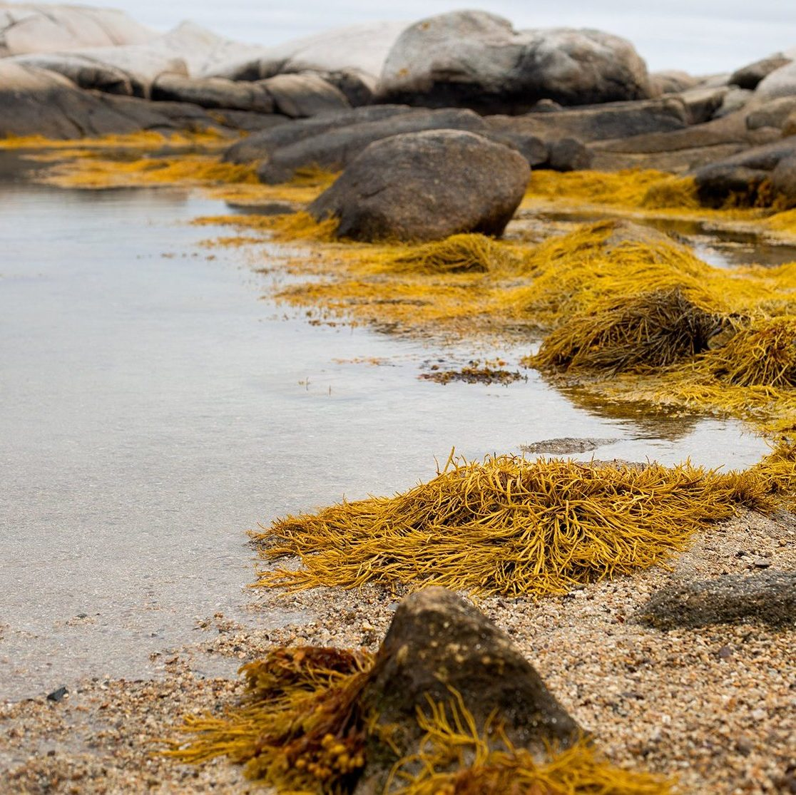 The Carrageenan Controversy: Busting the Myth